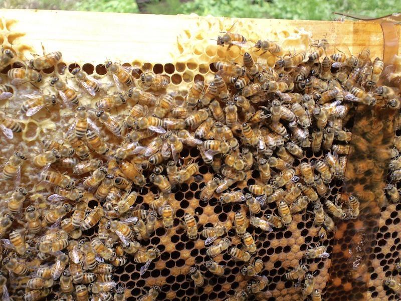 ミツバチは巣に戻ってはちみつを巣に貯める